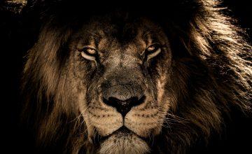 Kat€ in der Höhle der Löwen