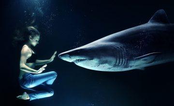 Tieftauchen mit Geldhaien